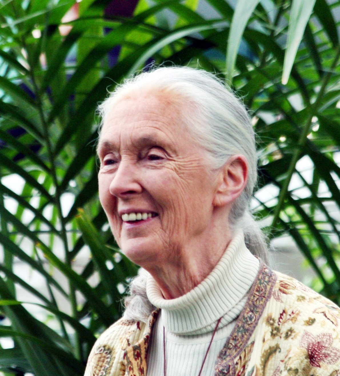 Jane Goodall: An Environmental Hero