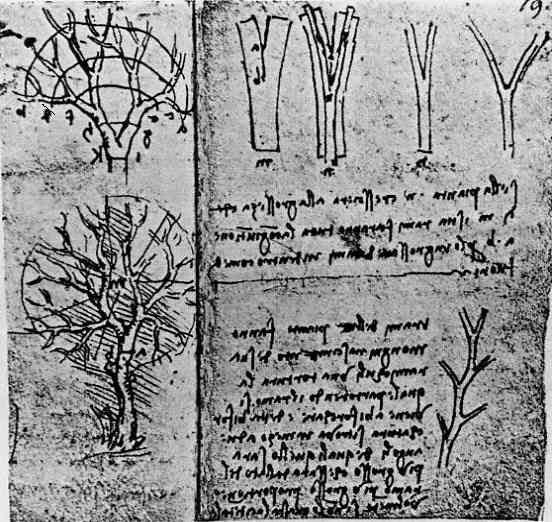 New Research Confirms Leonardo Da Vinci's Rule of Trees
